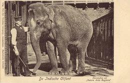 Artis De Indische Olifant - Amsterdam
