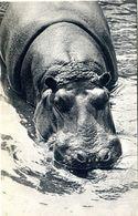 N06 / DEPT 94 . CPA ZOO DE VINCENNES  HIPPOPOTAME NEUVE - Hippopotames
