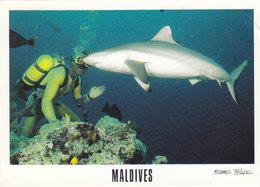 Maldives - Diving W Shark - Maldives