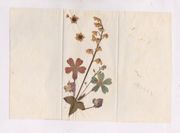 FLEURS SECHEES VERITABLES COLLEES SUR PAPIER SOIE - B. Plantes Fleuries & Fleurs