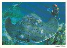 Maldives - Diving W Stingray - Maldives