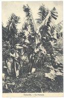 Cpa Espagne - Tenerife - Un Platanal ( Postée Vers Cotonou, Dahomey ) - Tenerife