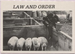 CPM - LAW AND ORDER - Edition Heroes - Cochons