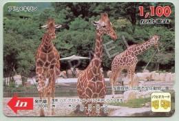 Carte De Bus Du Japon - Girafes (Recto-Verso) (JS) - Japon
