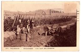 1910 - Riquewihr - Vendanges - Vue Sur Zellenberg - L'Alsace - N°247 - Imp. éd. Braun Et Cie - - Vines