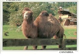 POSTAL PARQUE NATURALEZA CABARCENO CAMELLO - Animals