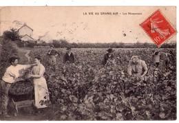 1913 - La Vie Au Grand Air - Les Vendanges - - Vignes