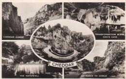 CHEDDAR MULTI VIEW - Cheddar