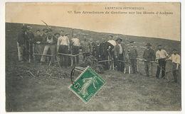 Les Arracheurs De Gentiane Sur Les Monts D' Aubrac . Suze , Avèze - Culture