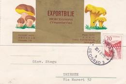 CARTOLINA POSTALE - JUGOSLAVIA - EXPORTBILJE - HERCEGNOVI - DESTINAZIONE - TRIESTE ( ITALIA ) 1961 - Lettres & Documents