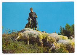 Dans Nos Montagne Beaux Moutons Ou Brebies Au Pâturage Berger Et Chèvre Postée De Draguignan En 1975 - Draguignan