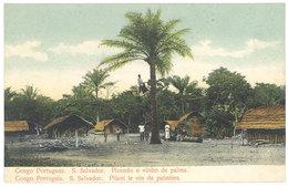 Cpa Afrique - Congo Portugais - S. Salvador - Pilant Le Vin De Palmiers - Congo - Kinshasa (ex Zaire)