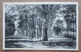 (J856) - Kasterlee - Goorseweg - Kasterlee