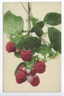 CPA - Fruit - Framboises - Union Postale Universelle - Martin Rommel - Klein, Catharina