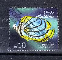 Maldive  -  2006. Pesce D' Acquario: Chetodon. Aquarium Fish. - Pesci