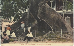 Silk Cotton Tree -  Nassau - BAHAMAS  - Colored - Postales