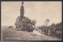 Wiltshire Postcard - River Avon, Salisbury   DC1821 - Salisbury