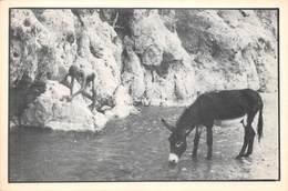 CPM - Photos Palomba - Voyage Au Maroc - Adolescent Nu âne - Photographe - Photographs