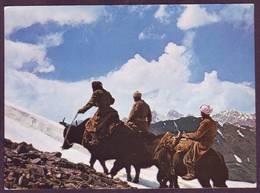 Afghanistan - ....Timbrée Kaboul... - Afghanistan