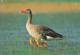 Bird - Oiseau - Vogel - Uccello - Pássaro - Pájaro - Animal - Animaux - Fauna - Oiseaux
