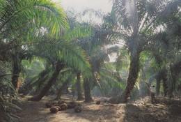 Postcard Oil Palm Plantation Malaysia By Great Star Of Kuala Lumpur My Ref  B22680 - Cultivation