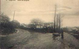 TONGRINNE « Route De Boignée » Ed. J. Volkaerts (1921) - Belgique