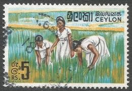 Ceylon. 1964-72 Definitives. 5r Used. SG 499 - Sri Lanka (Ceylon) (1948-...)