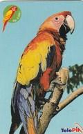 Indonesia - Parrot - Indonesia