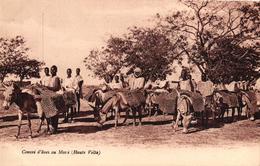 CONVOI D'ANES A MOSSI - HAUTE VOLTA - Burkina Faso