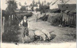 A La Campagne - Trois Amis - Cochons - Agriculture - Ferme (pliée) - Agriculture