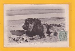 AFRIQUE - ALGERIE - BISKRA - Le Lion Du Désert - Biskra