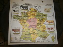 CARTE AGRICOLE GEOGRAPHIE ECONOMIQUE ET AGRICOLE  ANIMAUX DOMESTIQUES  ESPECE BOVINE  PAR ALBERT BERNARD DIM 31 X31 CM - Planches & Plans Techniques