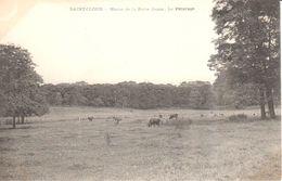 (92) Hauts De Seine - CPA - Saint-Cloud - Haras De La Porte Jaune - Le Pâturage - Saint Cloud