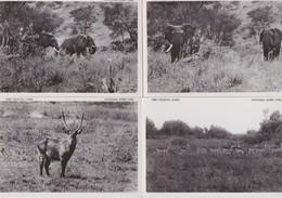 CONGO BELGE-PARC NATIONAL ALBERT-LOT-4 CARDS-ELEPHANTS+WATERBUCK+KOBS DE THOMAS-PLAINE DU LAC EDUARD-VOYEZ LES 2 SCANS - Autres