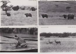 CONGO BELGE-PARC NATIONAL ALBERT-LOT-4 CARDS-BUFFLES+KOBS DE THOMAS+LEPTOPELIS-PLAINE DU LAC EDUARD-VOYEZ LES 2 SCANS - Autres