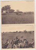CONGO BELGE-PARC NATIONAL ALBERT-LOT-2 CARDS-LION+VAUTOURS-PLAINE DU LAC EDOUARD-VOYEZ LES 2 SCANS - Autres
