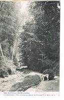 Linkebeek - Un Attelage Dans La Drève - 1905 - Linkebeek