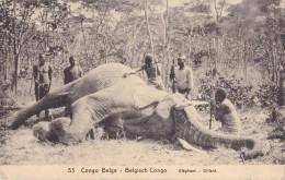 Congo Belge Eléphant Circulée En 1919 - Belgisch-Congo - Varia