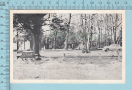 White Lake Ontario Canada - Harry Box's Grove Camping  - Postcard, Post Card, Carte Postale - Ontario