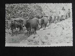 CP CAVE DI CARRARA TRASPORTO MARMI ANIMEE 1916 - Carrara