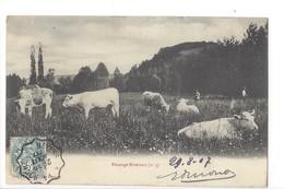 20182 - Pâturage Nivernais Vaches Et Paysans - Vaches