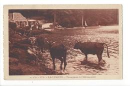 20192 - Lac Pavin Troupeau à L'Abreuvoir Vaches + Cachet Du Lac - Vaches