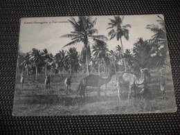 Tanzania  Est Africain Allemand ( Occupation Belge )  Cachet B.P.C.V.P.K.  Service Militaire  Kamel Kameel - Tanzanie