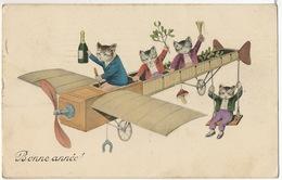 Chats En Voyage En Avion Champagne Gui Fer A Cheval  Misletoe Human Behavior - Gatos