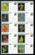 1977 - South Africa Postcard - Flora - Flowers [FZ075] - Zuid-Afrika (1961-...)