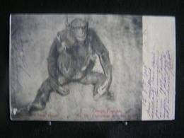 AP 4 - 300 - Afrique - Congo Français - N°19 Chimpansé Avec Son Enfant - Circulé 1906 - Congo Français - Autres