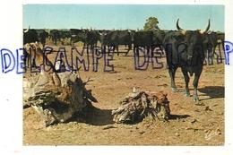 France. En Camargue ... Manade De Taureaux. Editions Estel - Stieren