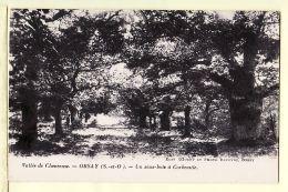 X91023 ORSAY Essonne Seine Oise Vallée CHEVREUSE Un Sous-Bois à CORBEVILLE 1910s DAUCHY Photo LEFEVRE - Orsay
