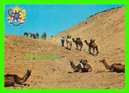 SAHARA MAROCAIN, MAROC -  PAR LES JOURS ET LES NUITS, LA CARAVANE VA, IMPASSIBLE -  EDITIONS JEFF - - Maroc