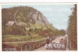 PASS OF BALLATER. SHEPHERD AND SHEEP - Aberdeenshire